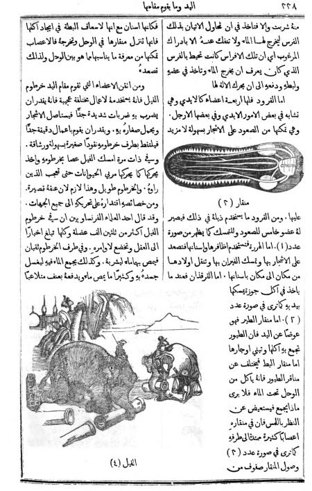 1874_Al-Jinan copy_387